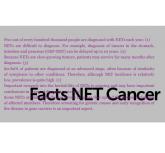 header Factbox NET1