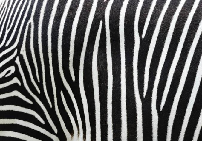 Go Zebra-Striped on social media to support World NET Cancer Day