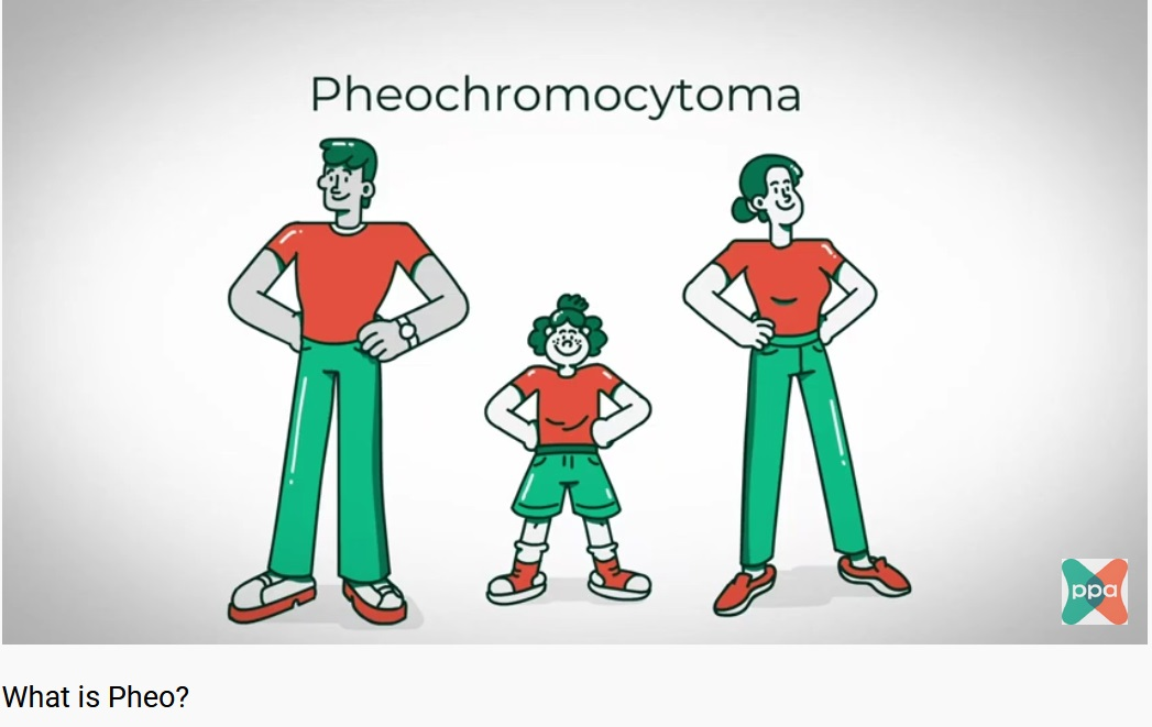 Animations Describe Pheochromocytoma and Paraganglioma